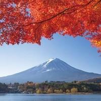 中文导游:日本东京-富士山 拼车一日游