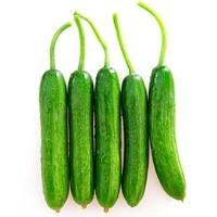 每日白菜精选:新鲜黄瓜、LED吸顶灯、小米钢化膜等