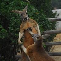 全国受理 : 澳大利亚个人旅游签证(一次/多次)