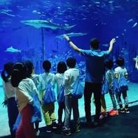 亲子游 : 北京海洋馆 夜宿 帐篷营套餐(1晚住宿+1次早、晚餐+馆内多种活动+脸部彩绘等)