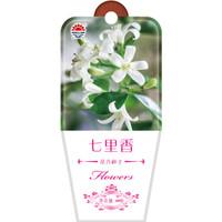 京东PLUS会员 : DS 北京东升种业 花卉种子 七里香 60粒 *23件