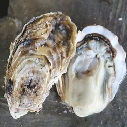 浓沁绿 新鲜威海乳山牡蛎 单个70g-90g 10斤