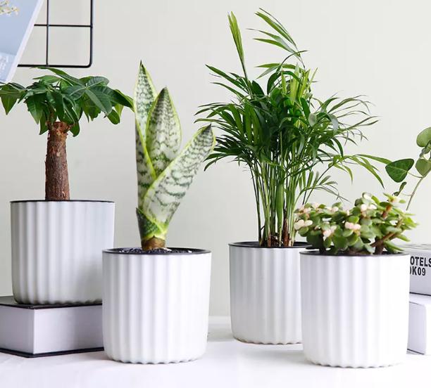绿科秀 水培植物