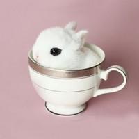新低:朗繽 寵物活體 海棠侏儒兔  白色 1只 *4件
