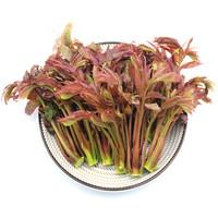 京東PLUS會員:綠鮮知  香椿芽  150g   *5件