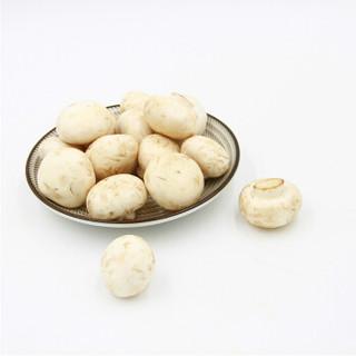 绿鲜知 口蘑 约400g 火锅食材 新鲜蔬菜