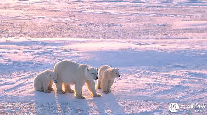 从4k到10w+,极地旅游全面解析——南北极干货大合集!