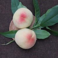 阳山 白凤水蜜桃礼盒装 8两大果 6个装