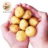 乡告 恩施富硒高?#20132;?#24515;马铃薯 2.5kg *2件