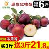 红啤梨?吸管梨 新鲜梨子带箱6斤水果啤酒梨红皮梨孕妇当季应季10