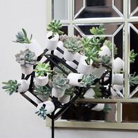 綠植北歐風凈化空氣室內桌面小盆栽創意墻面裝飾多肉植物組合盆栽