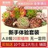 多肉植物新手套餐肉肉植物多肉組合綠植盆栽花卉含多肉花盆包郵
