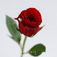 REFLOWER 花點時間 10枝單頭玫瑰