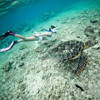 当地玩乐 : 追逐海龟,寻找小丑鱼,看大片珊瑚群!菲律宾杜马盖地-APO岛一日游
