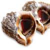 青島鮮活大海螺 新鮮花螺貝類 海鮮水產 中號海螺3斤(12-21只)