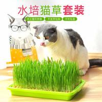 TOM CAT 派可为  水培猫草种子种植套装