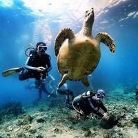 雙11預售 : 泰國普吉島PADI OW/AOW 潛水考證