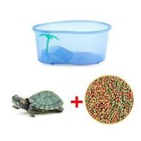 家用小乌龟缸+1只乌龟+40天龟粮