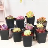 多肉植物貴貨超萌套裝組合美肉狀態綠植室內花卉盆栽帶盆送土拼盤