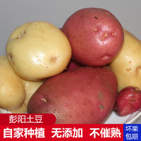 寧夏馬鈴薯新鮮土豆洋芋黃心土豆5斤左右裝