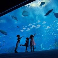 新加坡環球影城+S.E.A.海洋館+水上探險樂園 三大主題樂園套票