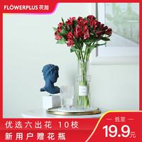 FlowerPlus花加六出花水仙百合鮮花花束家居裝飾產地直發包郵