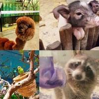 魔都大型室內動物園!上海茱莉の動物園單人票