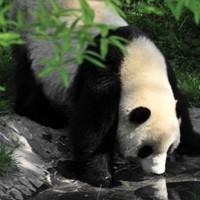 上海-成都+都青/峨乐/九寨沟5天4晚自由行(三大主题任选+专车接送机)