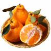 移動端 : 不知火丑橘 丑柑 5斤裝 *2件