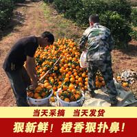 江西正宗贛南臍橙現摘新鮮水果甜橙子現貨帶箱5斤
