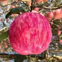 汇果康 冰糖心苹果 带箱10斤 果径70-75mm
