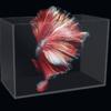 魚麒麟 超白桌面小魚缸  500*300*350  裸缸+湊單品