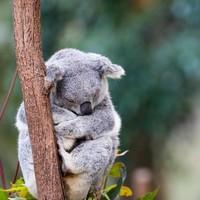 初游必玩线路!全国多地-澳大利亚悉尼+凯恩斯+墨尔本11天9晚自由行