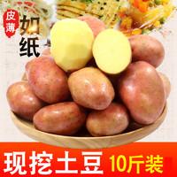 云南小土豆新鮮10斤馬鈴薯農產品蔬菜紅皮洋芋批發迷你小黃心土豆