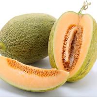 西洲哈密瓜新鮮網紋瓜