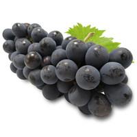 云南精品無籽夏黑葡萄 提子 新鮮水果 夏黑葡萄3斤鉑金裝 *3件