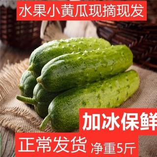 佑嘉木 水果小黄瓜/东北旱黄瓜  5斤