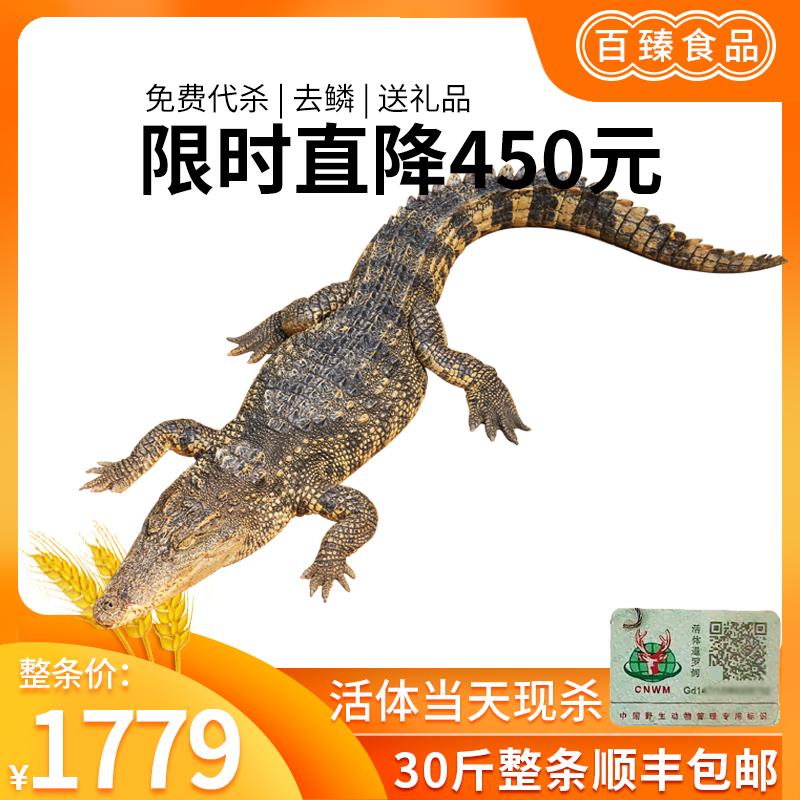 百臻 新鲜暹罗鳄活体 30斤 整只