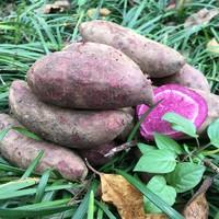 果珍甄 农家沙地紫薯 9斤
