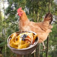 长生和 散养土鸡 850g *2件