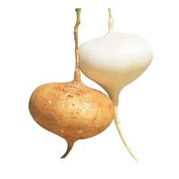 果品萃 新鲜凉薯白地瓜 9斤