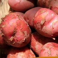可米庄园 云南新鲜红皮小土豆 9斤