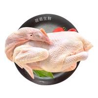 筱诺  生鲜三黄童子鸡 新鲜现杀   750g/只 *3件