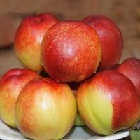 1日0点、61预告:京喜百亿补贴:果粒果粒 脆甜油桃 5斤装