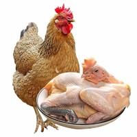 仓帝  新鲜现宰老母鸡  杀前约2.7斤/只 *2件