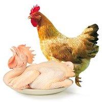 WENS 温氏 农养鸡 1kg *8件