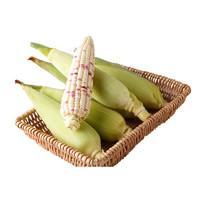 古寨山 非转基因甜糯玉米 5斤