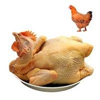京东PLUS会员:温氏 散养土黄鸡 1.2kg *8件