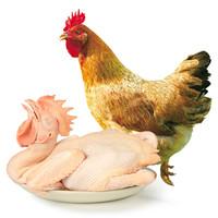 WENS 温氏 农养鸡 1kg *3件