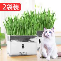 华畜 猫草种子猫薄荷猫零食去毛球化毛膏猫草水培种籽种植套装猫咪用品-2袋装